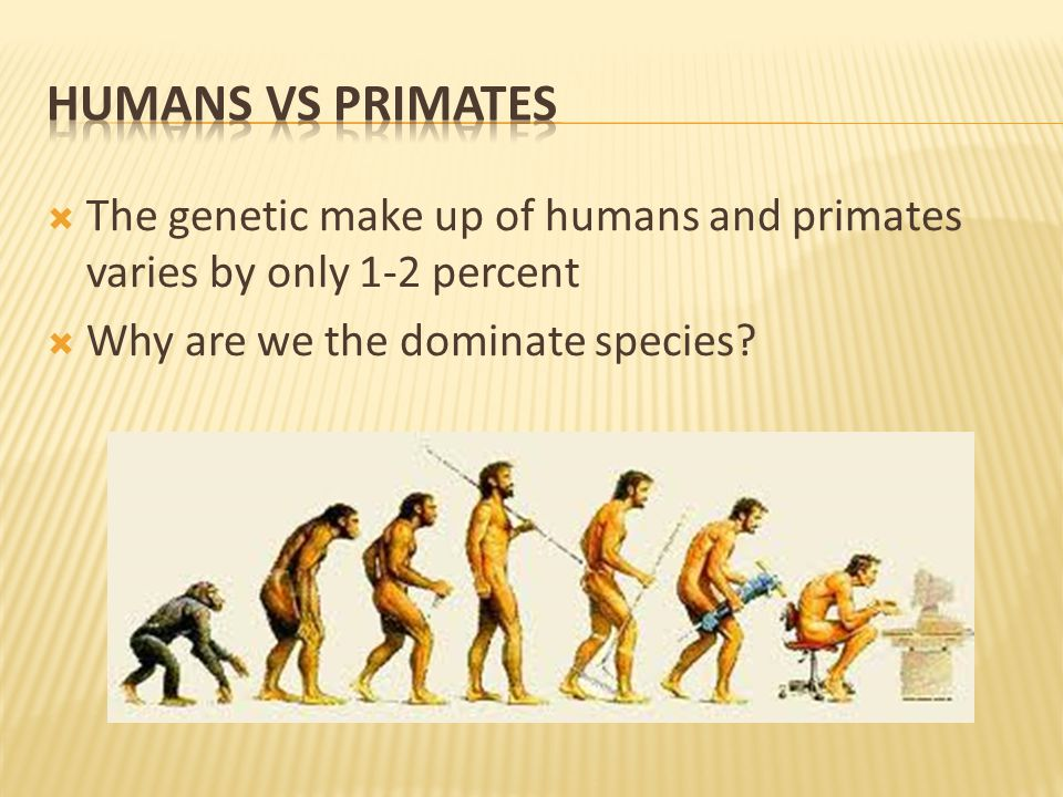  The genetic make up of humans and primates varies by only 1-2 percent  Why are we the dominate species