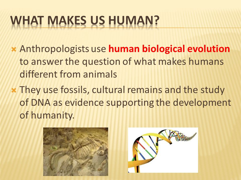  Anthropologists use human biological evolution to answer the question of what makes humans different from animals  They use fossils, cultural remains and the study of DNA as evidence supporting the development of humanity.