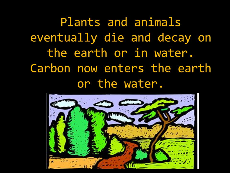 Plants and animals eventually die and decay on the earth or in water.