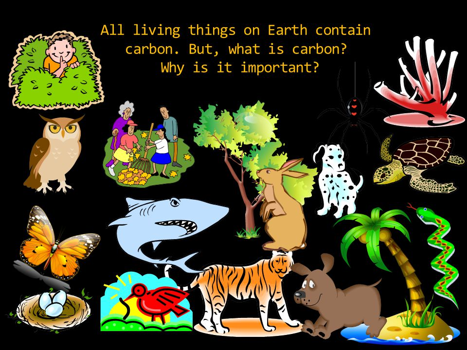 All living things on Earth contain carbon. But, what is carbon Why is it important