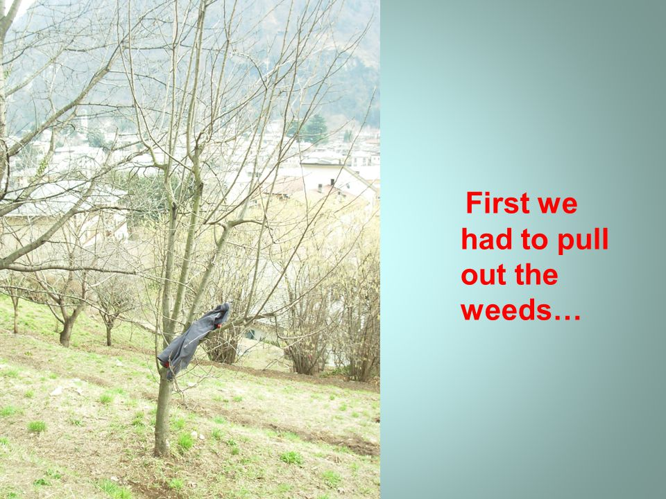 First we had to pull out the weeds…