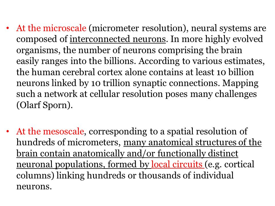 At the microscale (micrometer resolution), neural systems are composed of interconnected neurons.