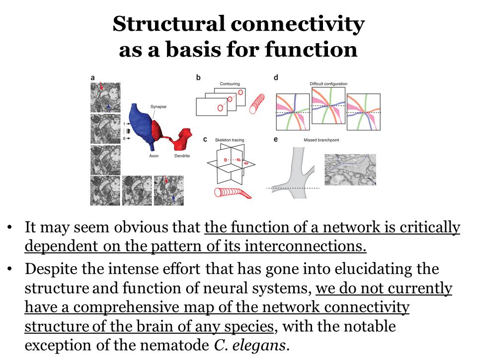 Structural connectivity as a basis for function It may seem obvious that the function of a network is critically dependent on the pattern of its interconnections.