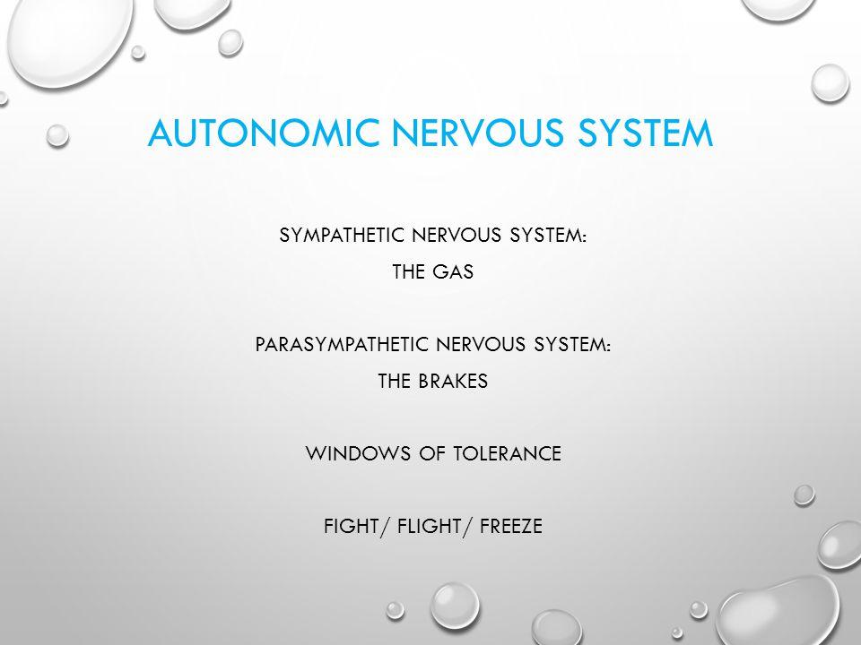 AUTONOMIC NERVOUS SYSTEM SYMPATHETIC NERVOUS SYSTEM: THE GAS PARASYMPATHETIC NERVOUS SYSTEM: THE BRAKES WINDOWS OF TOLERANCE FIGHT/ FLIGHT/ FREEZE