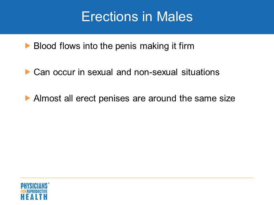  Erections in Males  Blood flows into the penis making it firm  Can occur in sexual and non-sexual situations  Almost all erect penises are around the same size