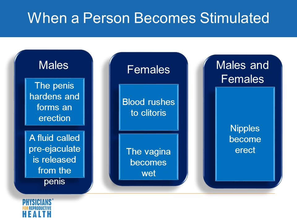  When a Person Becomes Stimulated Males The penis hardens and forms an erection A fluid called pre-ejaculate is released from the penis Females Males