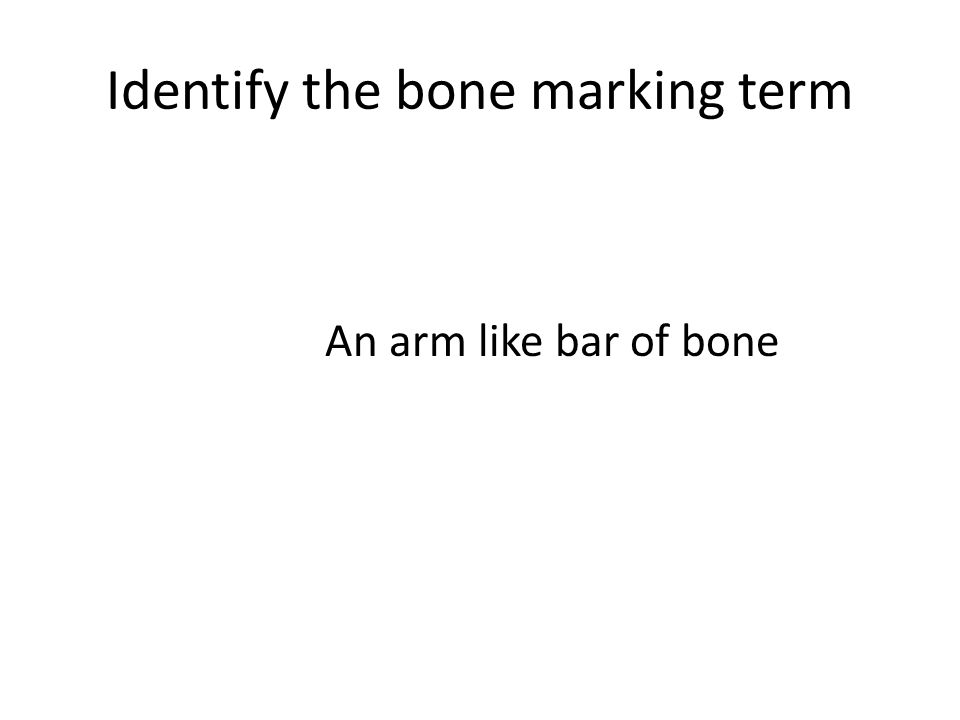 Identify the bone marking term An arm like bar of bone