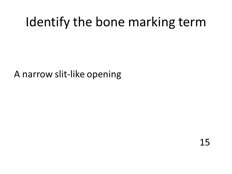 Identify the bone marking term A narrow slit-like opening 15