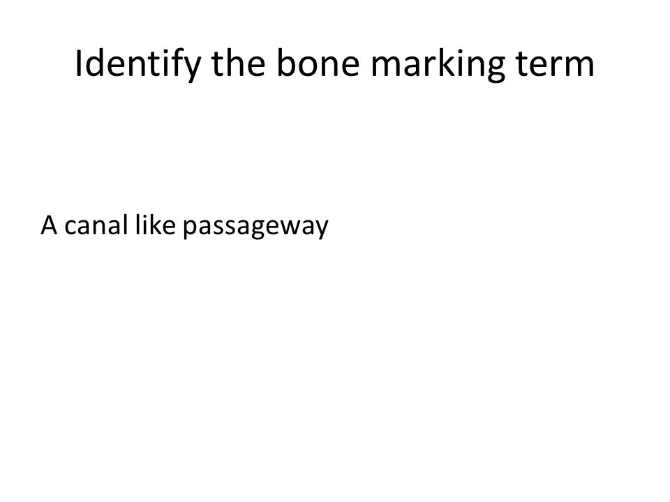 Identify the bone marking term A canal like passageway