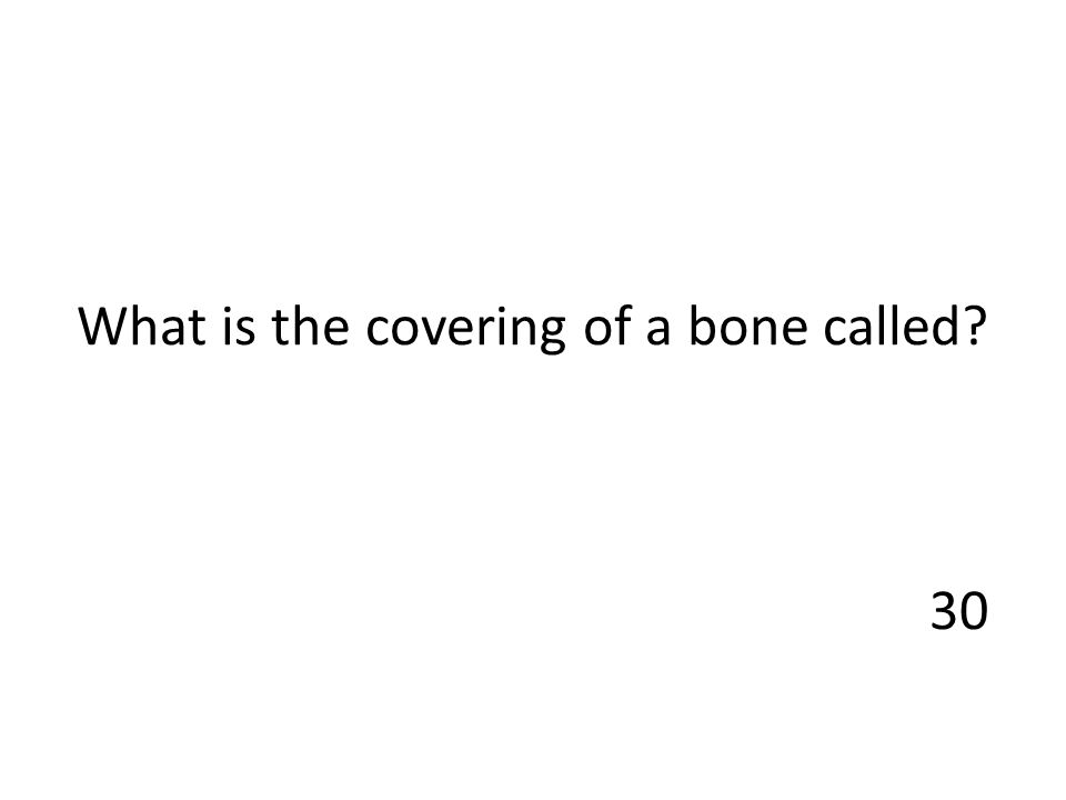 What is the covering of a bone called? 30