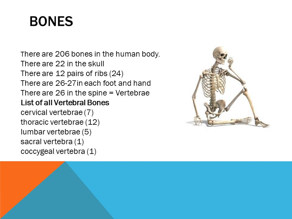 BONES T here are 206 bones in the human body. There are 22 in the skull There are 12 pairs of ribs (24) There are 26-27in each foot and hand There are
