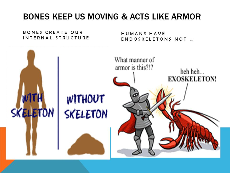 BONES KEEP US MOVING & ACTS LIKE ARMOR BONES CREATE OUR INTERNAL STRUCTURE HUMANS HAVE ENDOSKELETONS NOT …