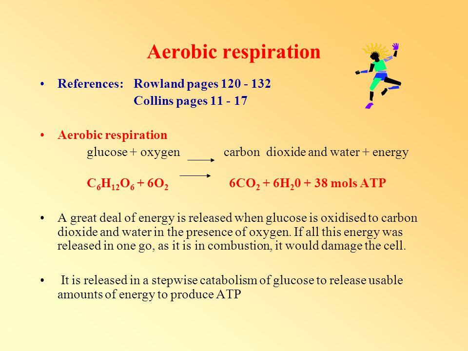 ATP ATP - adenosine triphosphate = adenosine P - P - P ADP - adenosine diphosphate =adenosine P - P ADP + P ATP ATP ADP + P + energy for all cell activities