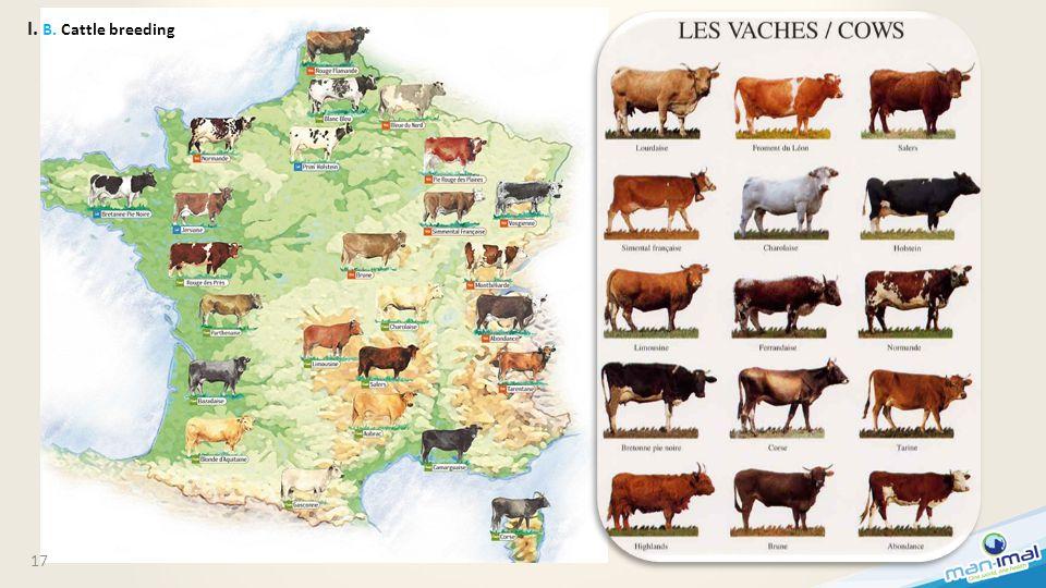 17 I. B. Cattle breeding