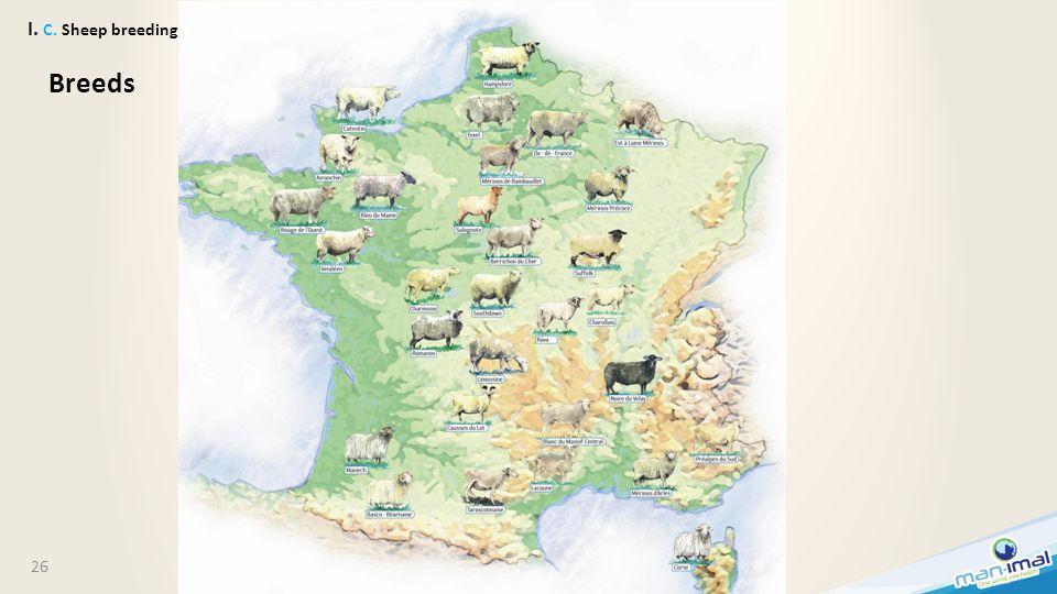 26 I. C. Sheep breeding Breeds
