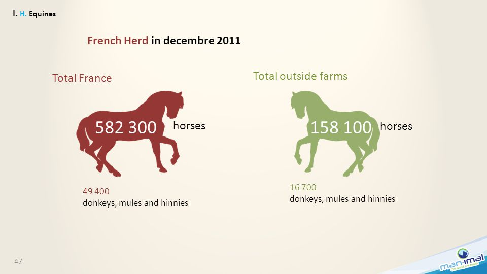 47 I. H. Equines French Herd in decembre 2011 Total France Total outside farms 582 300158 100 horses 49 400 donkeys, mules and hinnies 16 700 donkeys,