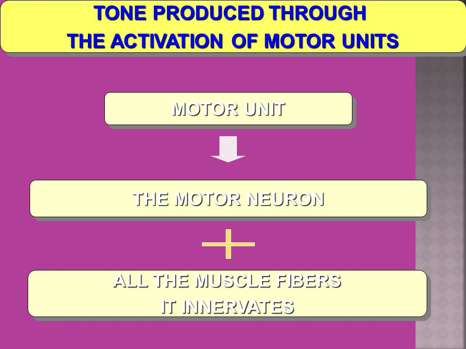 TONE PRODUCED THROUGH THE ACTIVATION OF MOTOR UNITS TONE PRODUCED THROUGH THE ACTIVATION OF MOTOR UNITS MOTOR UNIT THE MOTOR NEURON ALL THE MUSCLE FIBERS IT INNERVATES ALL THE MUSCLE FIBERS IT INNERVATES