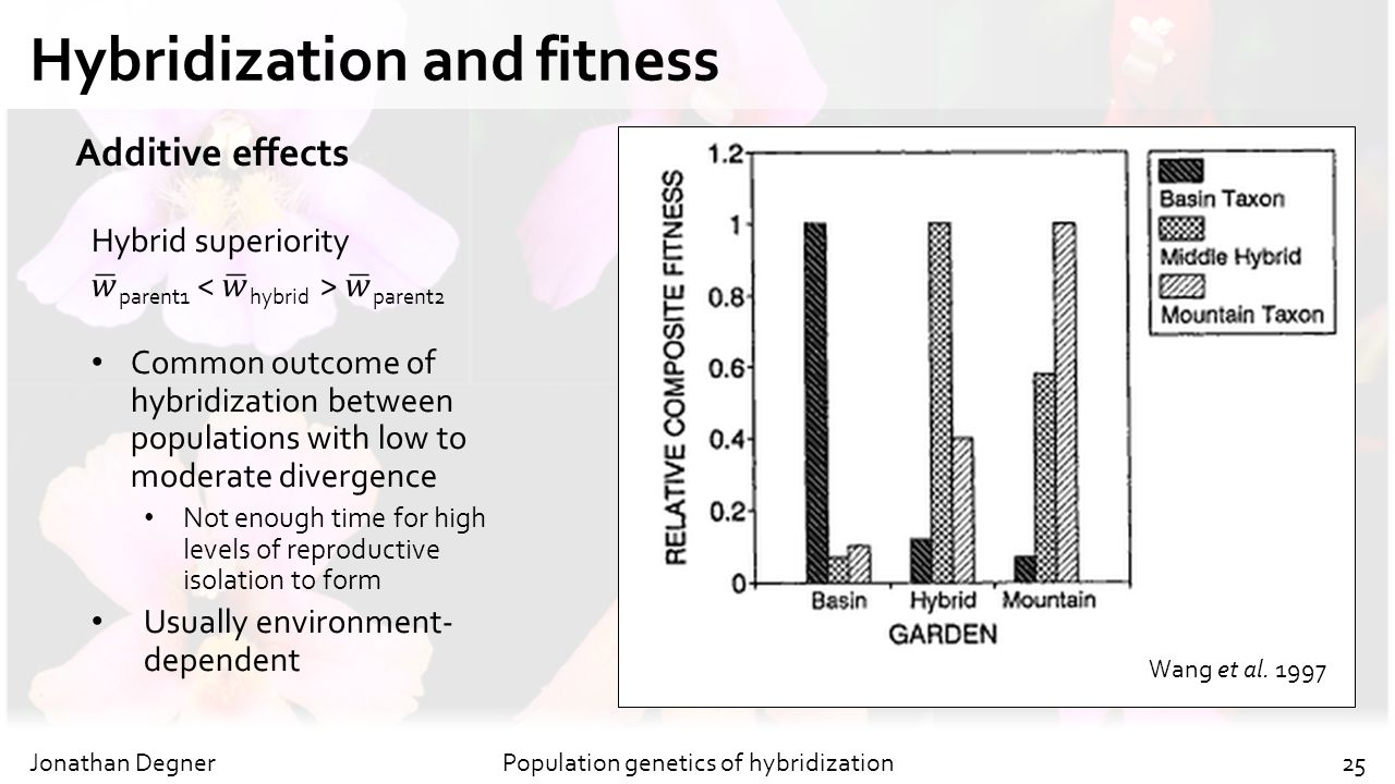 Hybridization and fitness Jonathan DegnerPopulation genetics of hybridization25 Additive effects Wang et al. 1997