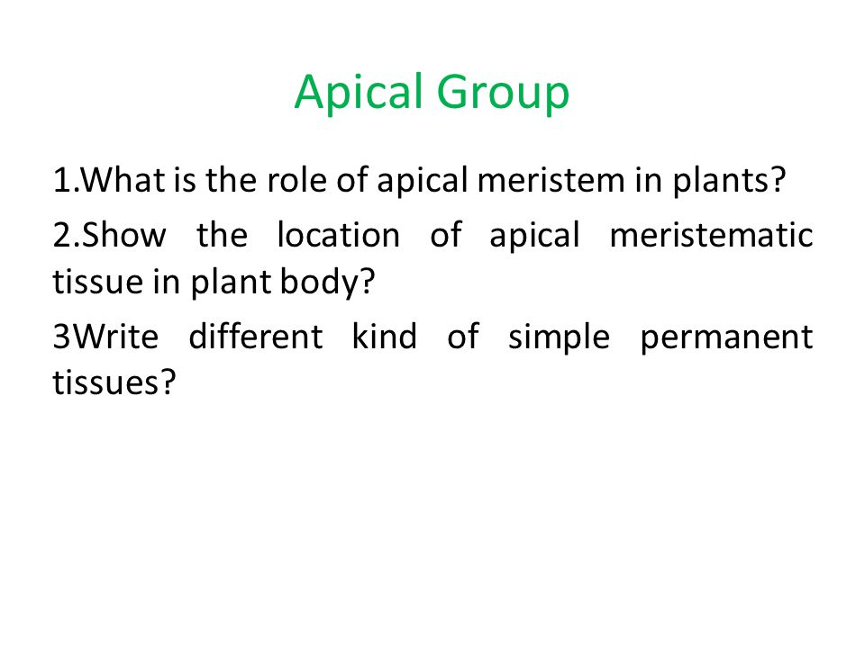  Group Activity ( TEACHER WILL MAKE 4 GROUPS ) Tissue Group : What is the utility of tissues in multicellular organisms?