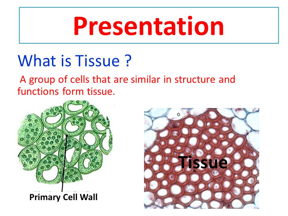 P.K. Testing 1.What is cell? 2.Do you know prokaryotic and eukaryotic cells? 3.What are unicellular and multicellular organisms? 4.What we call group