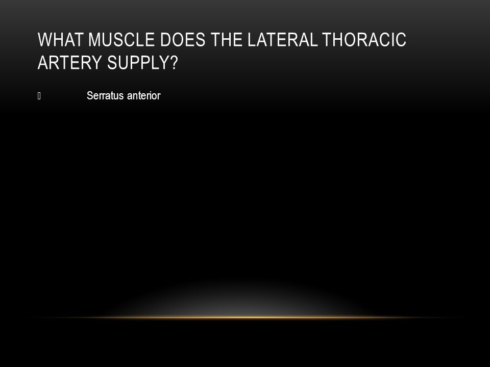 WHAT MUSCLE DOES THE THORACODORSAL ARTERY SUPPLY?