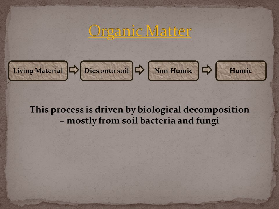 Living MaterialDies onto soilHumicNon-Humic This process is driven by biological decomposition – mostly from soil bacteria and fungi