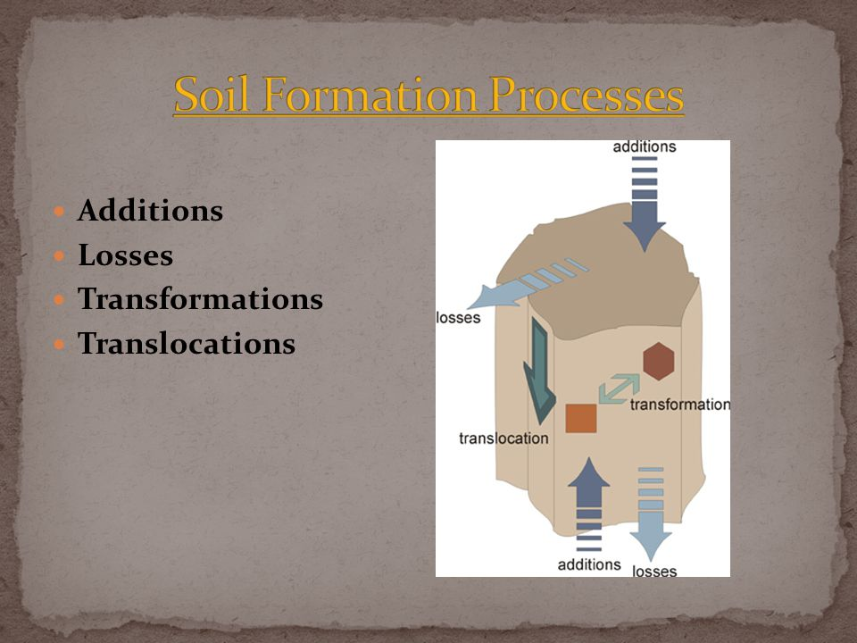 Additions Losses Transformations Translocations