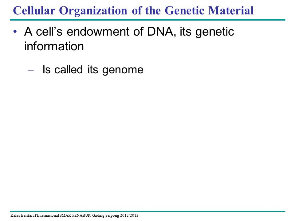 Kelas Berrtaraf Internasional SMAK PENABUR Gading Serpong 2012/2013 Cellular Organization of the Genetic Material A cell's endowment of DNA, its genetic information – Is called its genome