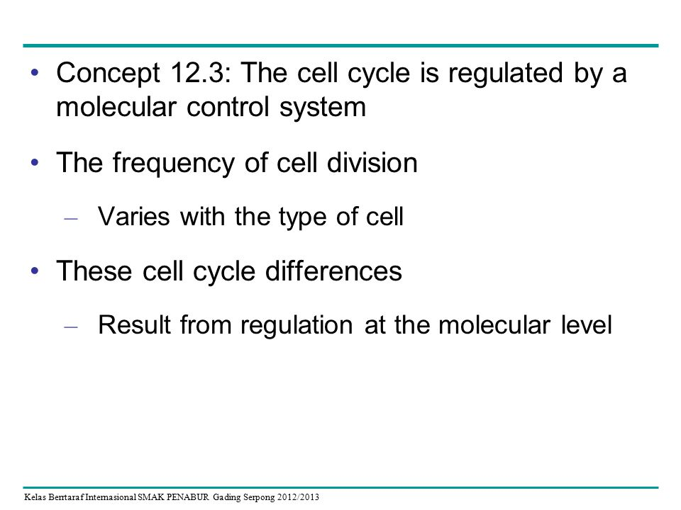 Kelas Berrtaraf Internasional SMAK PENABUR Gading Serpong 2012/2013 Concept 12.3: The cell cycle is regulated by a molecular control system The frequency of cell division – Varies with the type of cell These cell cycle differences – Result from regulation at the molecular level