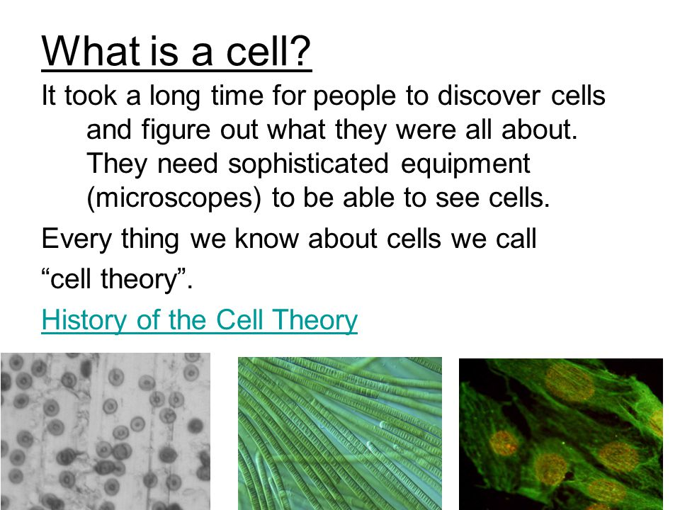 What is a cell.