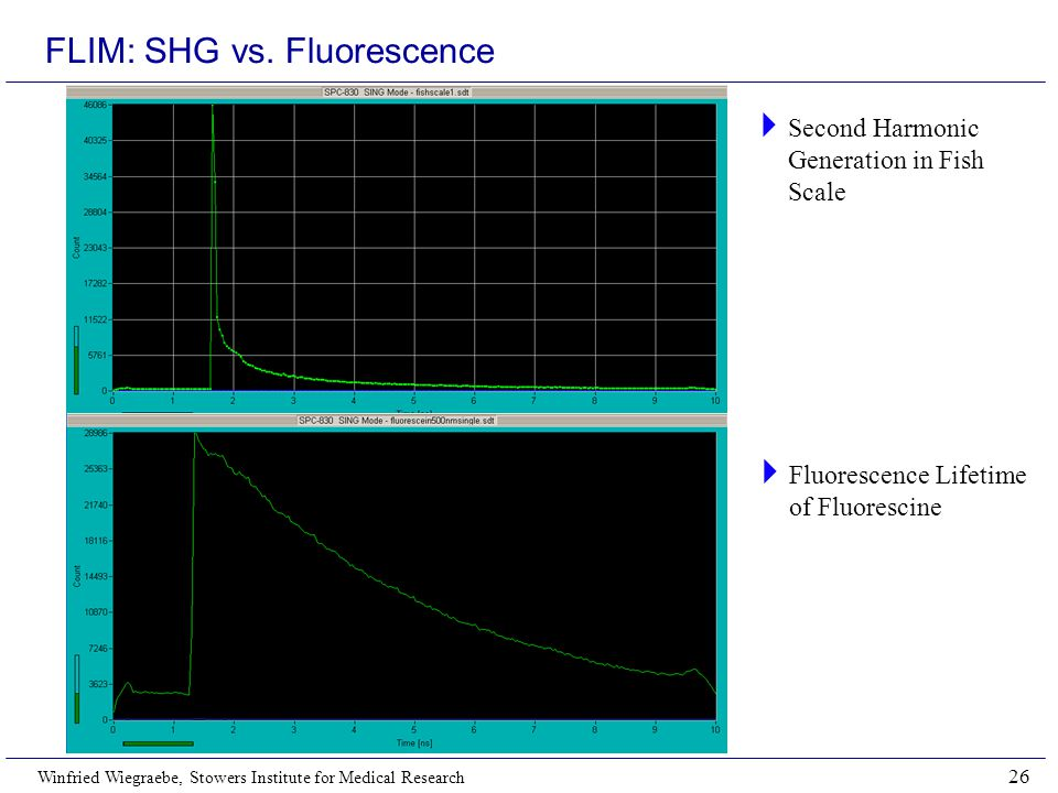 Winfried Wiegraebe, Stowers Institute for Medical Research 26 FLIM: SHG vs. Fluorescence  Second Harmonic Generation in Fish Scale  Fluorescence Lif