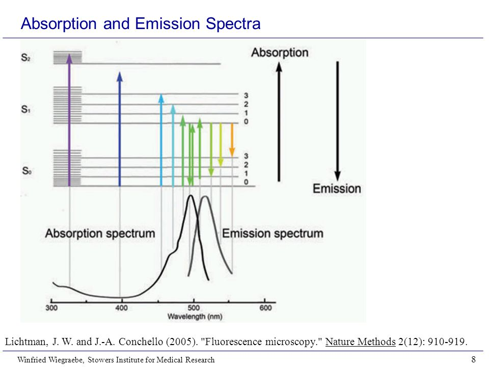 Winfried Wiegraebe, Stowers Institute for Medical Research 8 Absorption and Emission Spectra Lichtman, J.