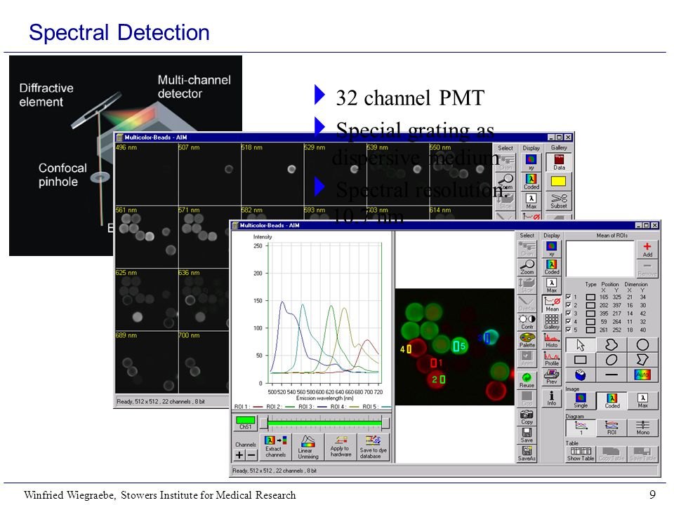 Winfried Wiegraebe, Stowers Institute for Medical Research 9 Spectral Detection  32 channel PMT  Special grating as dispersive medium  Spectral resolution: 10.7 nm