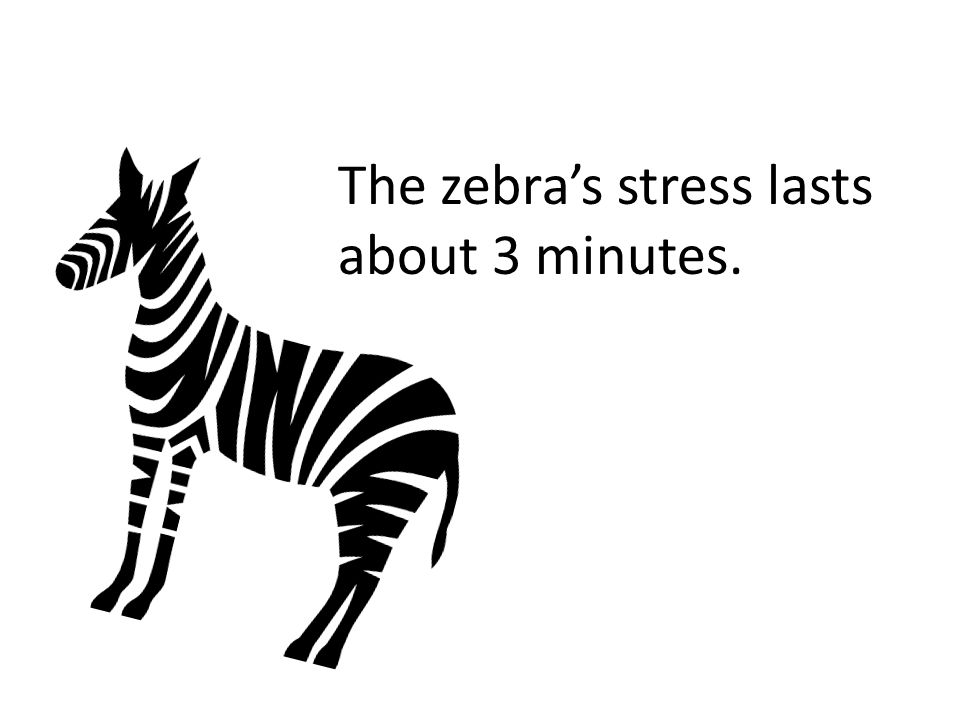 The zebra and the lion