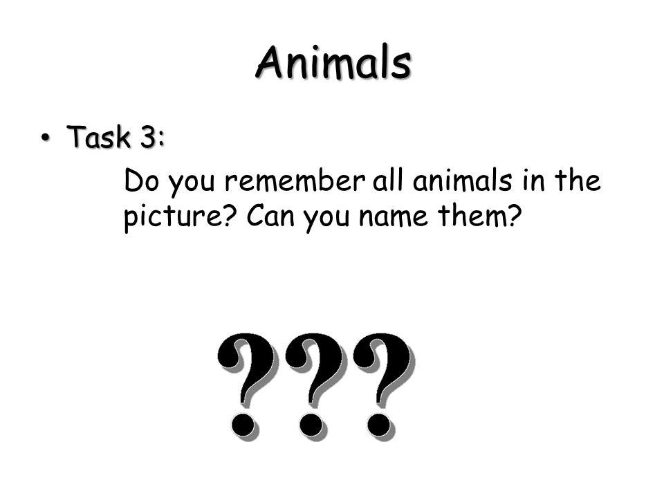 Match the pictures bellow with the correct expression: a spider a hippo a butterfly a tiger a monkey a penguin a rhinoa giraffe a bear a snake a crocodile a leopard an elephant a lion a zebra