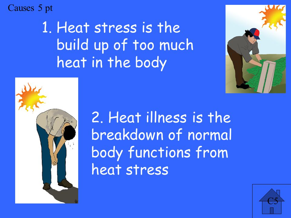 Causes 5 pt 1.Heat stress is the build up of too much heat in the body 2.