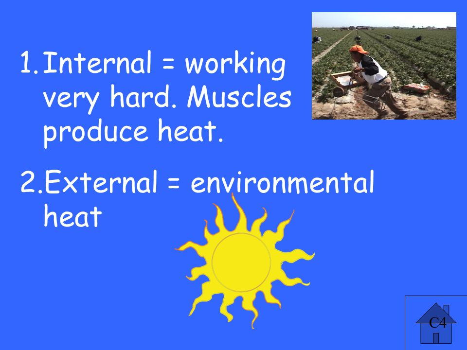 C4 Causes 4 pt 1.Internal = working very hard. Muscles produce heat.