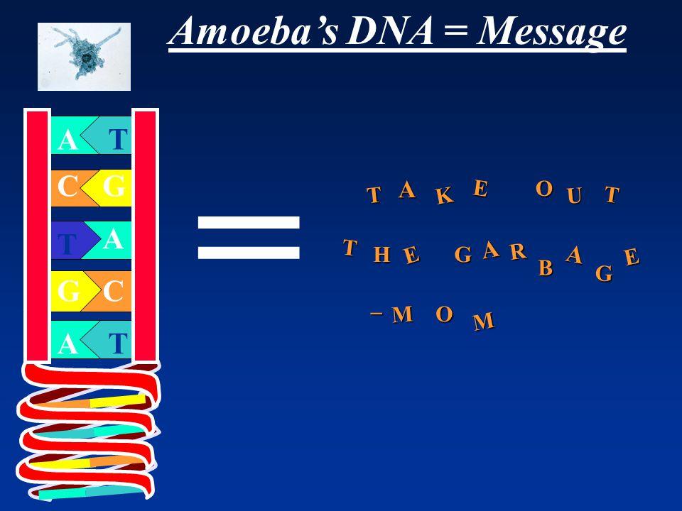 Amoeba's DNA = Message A T G C A G T A C T T K E O U HG R B M T T E E A A A G O M _ =