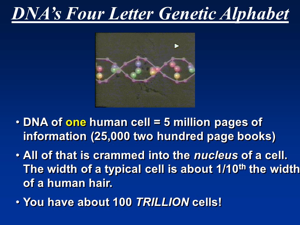 DNA's Four Letter Genetic Alphabet DNA of one human cell = 5 million pages of information (25,000 two hundred page books) All of that is crammed into the nucleus of a cell.