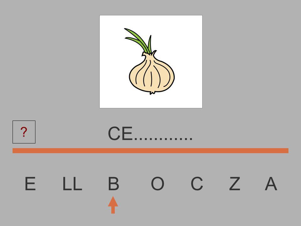 E LL B O C Z A C...............