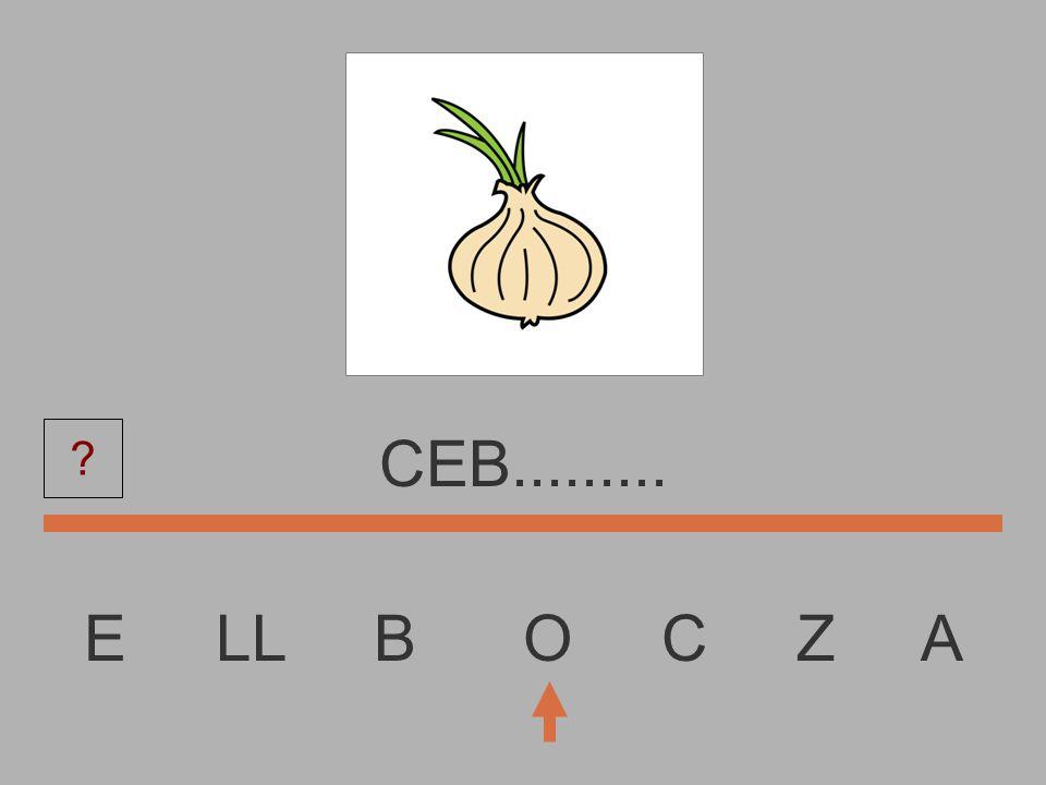 E LL B O C Z A CE............