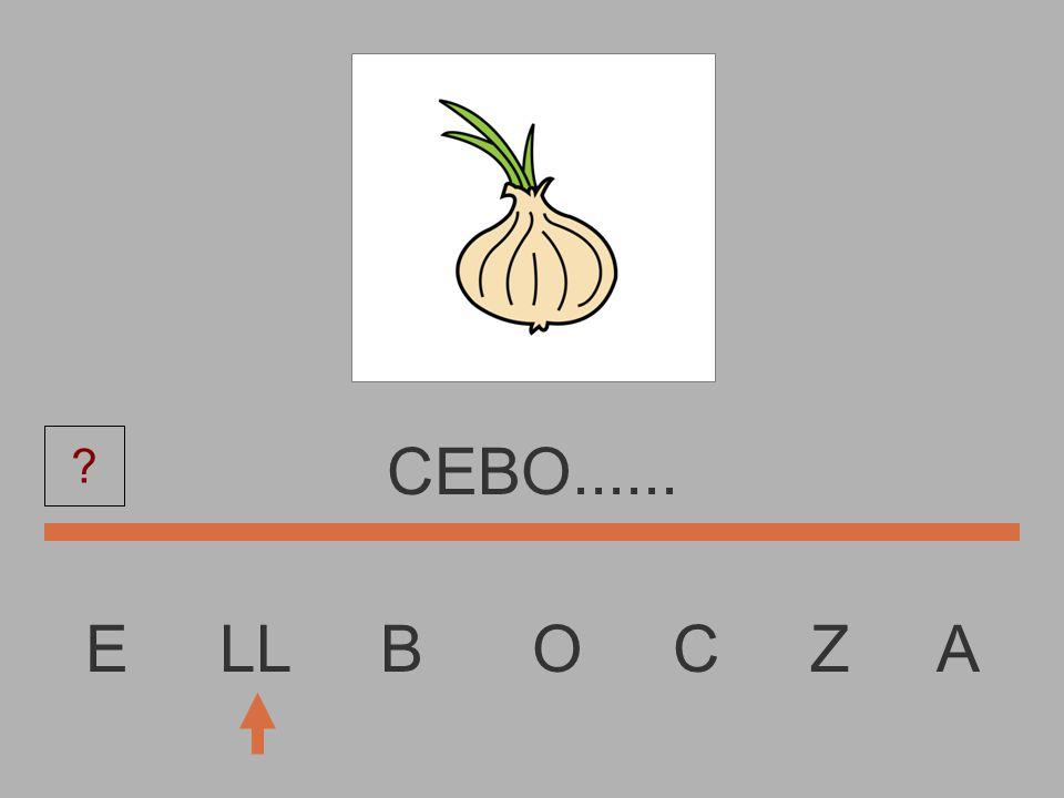 E LL B O C Z A CEB.........