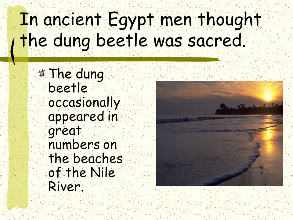 The Scarab Beetle is also known as the Dung Beetle.