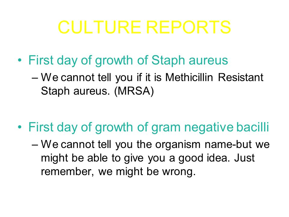 CULTURE REPORTS First day of growth of Staph aureus –We cannot tell you if it is Methicillin Resistant Staph aureus.