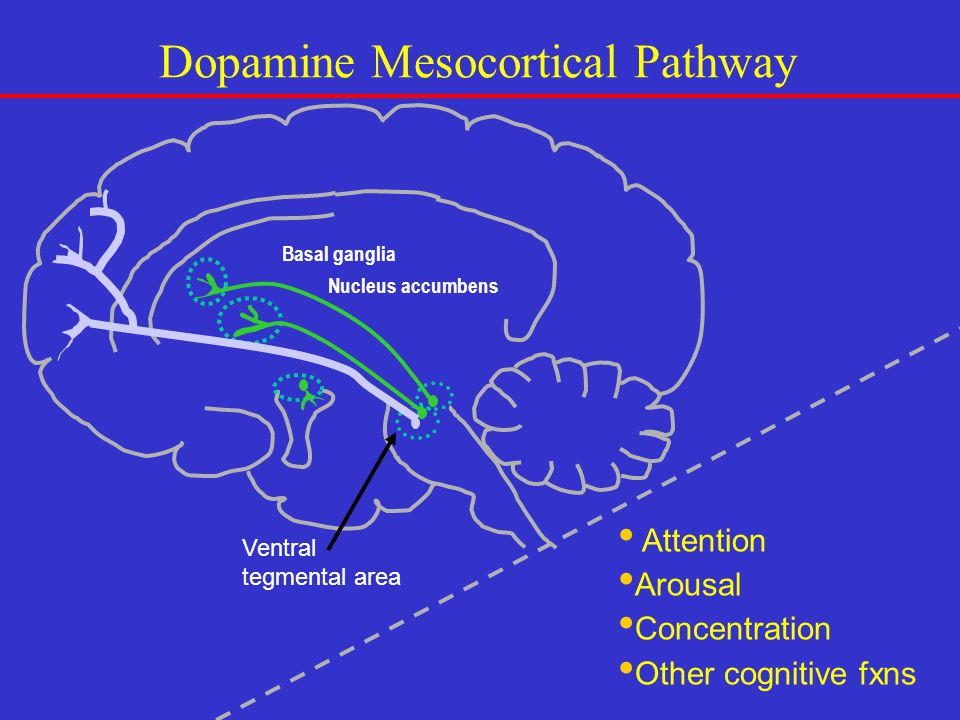 Dopamine Mesocortical Pathway Attention Arousal Concentration Other cognitive fxns Ventral tegmental area Nucleus accumbens Basal ganglia