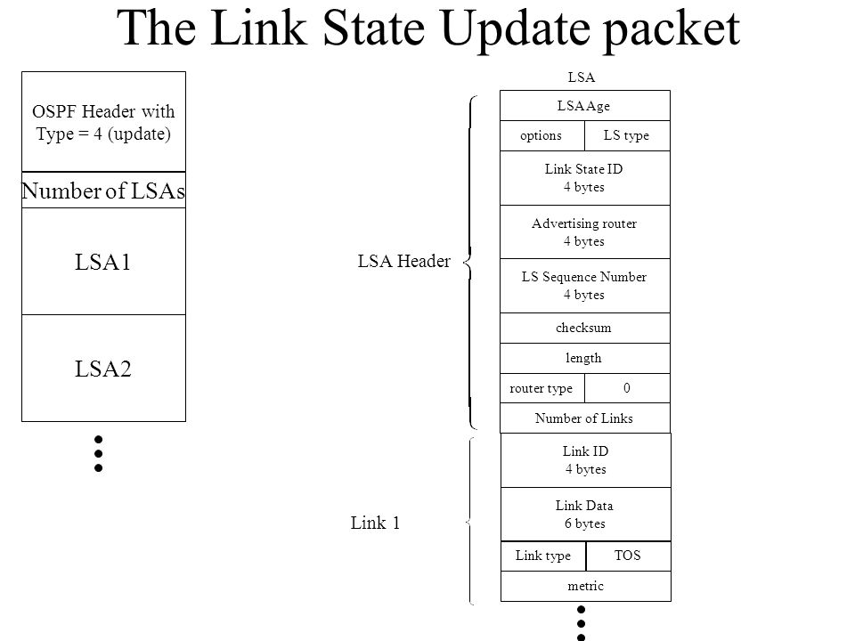 The Link State Update Packet for Project OSPF Header with Type = 4 (update) Number of LSAs LSA1 LSA2 LSA Age Don'tcare Link State ID 8 bytes don't care 4 bytes LS Sequence Number 4 bytes don't care Don'tcare Number of Links LSA LSA Header Link ID 8 bytes Link Data 6 bytes Link typeTOS metric Link 1