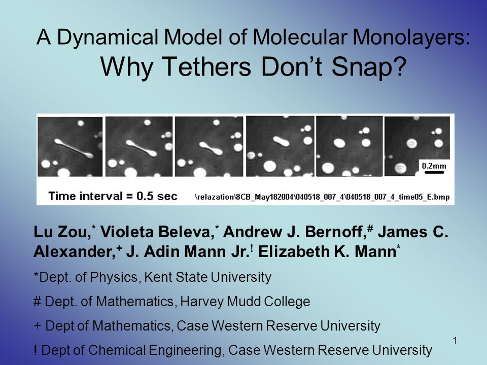 1 A Dynamical Model of Molecular Monolayers: Why Tethers Don't Snap? Lu Zou, * Violeta Beleva, * Andrew J. Bernoff, # James C. Alexander, + J. Adin Ma