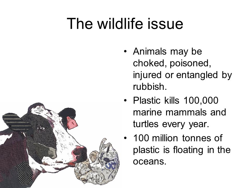 The wildlife issue Animals may be choked, poisoned, injured or entangled by rubbish.