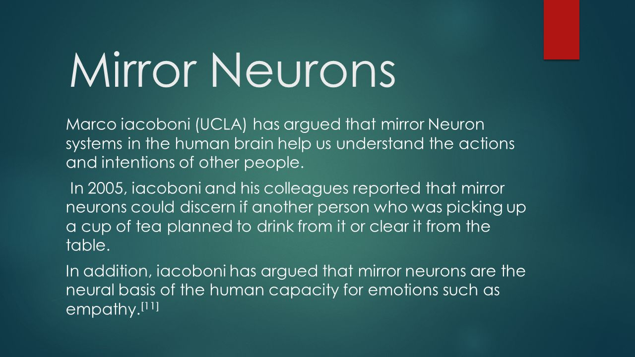 Mirror Neurons Marco iacoboni (UCLA) has argued that mirror Neuron systems in the human brain help us understand the actions and intentions of other people.