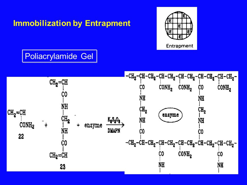 Poliacrylamide Gel Immobilization by Entrapment